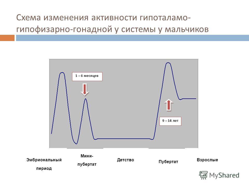 Схема изменения активности гипоталамо - гипофизарно - гонадной у системы у мальчиков 1 – 6 месяцев 9 – 14 лет Эмбриональный период Мини- пубертат Детство Пубертат Взрослые