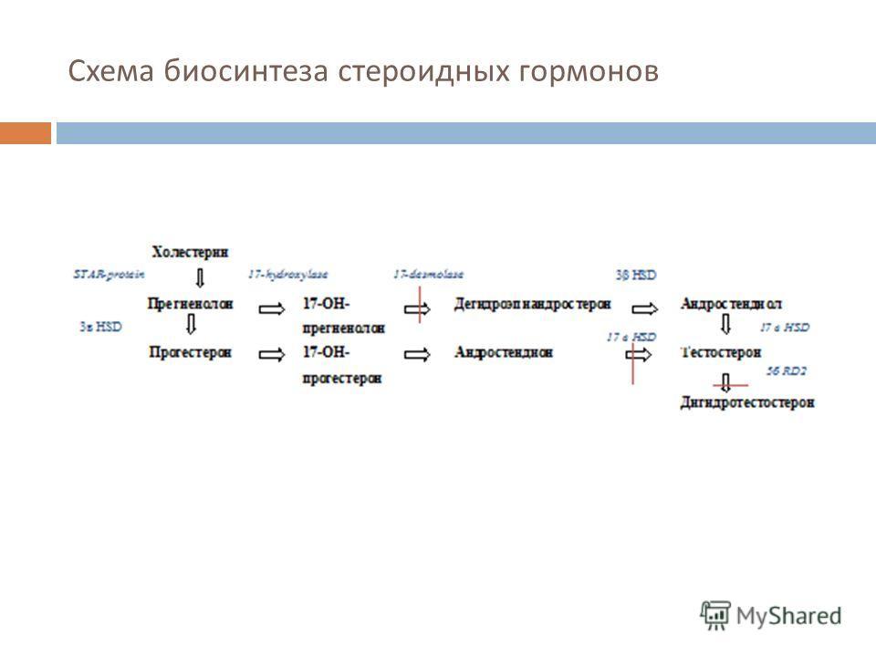 Схема биосинтеза стероидных гормонов