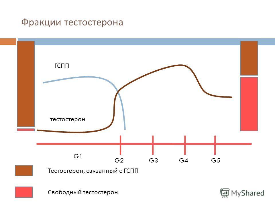 Свободный тестостерон связанный тестостерон у