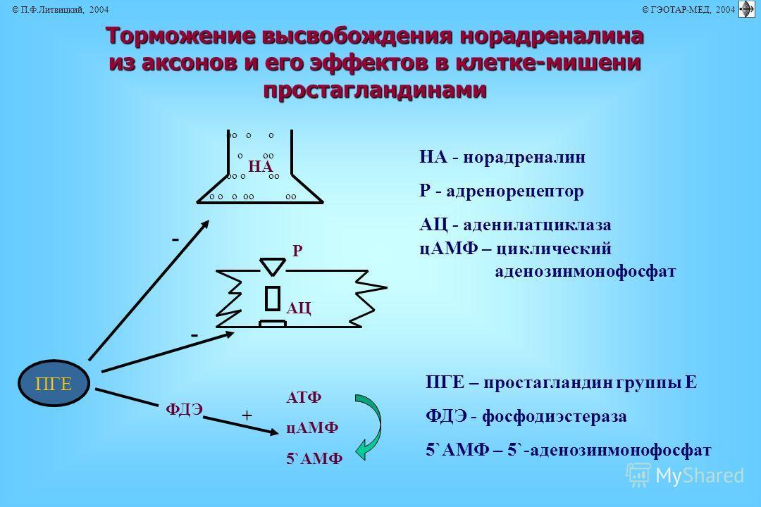 Торможение высвобождения норадреналина из аксонов и его эффектов в клетке-мишени простагландинами НА - норадреналин Р - адренорецептор АЦ - аденилатциклаза ПГЕ – простагландин группы Е ФДЭ - фосфодиэстераза цАМФ – циклический аденозинмонофосфат 5`АМФ