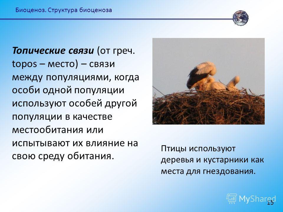 Биоценоз. Структура биоценоза 15 Топические связи (от греч. topos – место) – связи между популяциями, когда особи одной популяции используют особей другой популяции в качестве местообитания или испытывают их влияние на свою среду обитания. Птицы испо