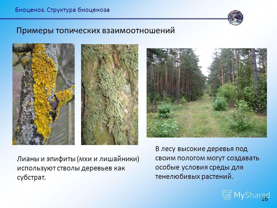 Биоценоз. Структура биоценоза 16 В лесу высокие деревья под своим пологом могут создавать особые условия среды для тенелюбивых растений. Примеры топических взаимоотношений Лианы и эпифиты (мхи и лишайники) используют стволы деревьев как субстрат.