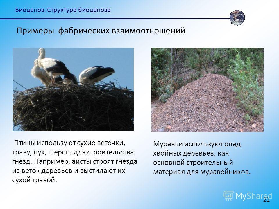 Биоценоз. Структура биоценоза 22 Птицы используют сухие веточки, траву, пух, шерсть для строительства гнезд. Например, аисты строят гнезда из веток деревьев и выстилают их сухой травой. Примеры фабрических взаимоотношений Муравьи используют опад хвой