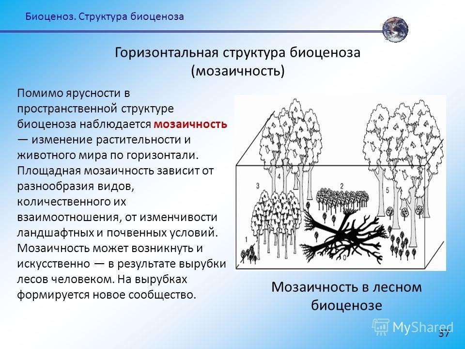 Биоценоз. Структура биоценоза 37 Горизонтальная структура биоценоза (мозаичность) Помимо ярусности в пространственной структуре биоценоза наблюдается мозаичность изменение растительности и животного мира по горизонтали. Площадная мозаичность зависит