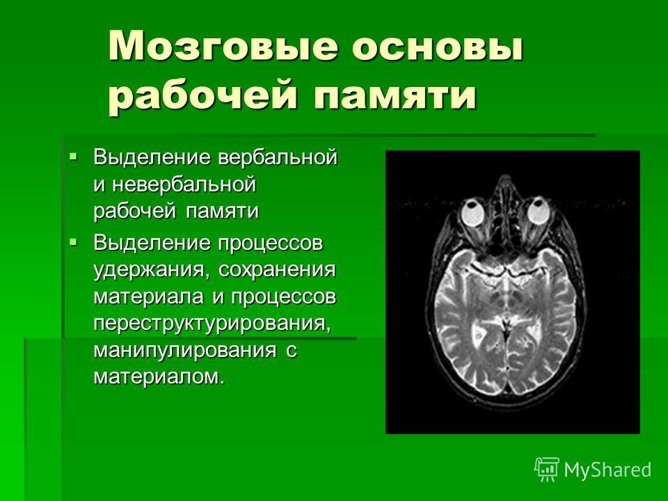 Мозговые основы рабочей памяти Выделение вербальной и невербальной рабочей памяти Выделение вербальной и невербальной рабочей памяти Выделение процессов удержания, сохранения материала и процессов переструктурирования, манипулирования с материалом. В