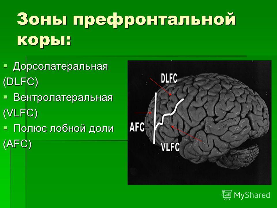 Зоны префронтальной коры: Дорсолатеральная Дорсолатеральная (DLFC) Вентролатеральная Вентролатеральная(VLFC) Полюс лобной доли Полюс лобной доли(AFC)