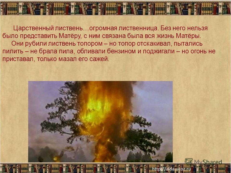 Царственный листвень…огромная лиственница. Без него нельзя было представить Матёру, с ним связана была вся жизнь Матёры. Они рубили листвень топором – но топор отскакивал, пытались пилить – не брала пила, обливали бензином и поджигали – но огонь не п