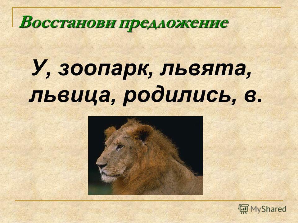 Восстанови предложение У, зоопарк, львята, львица, родились, в.