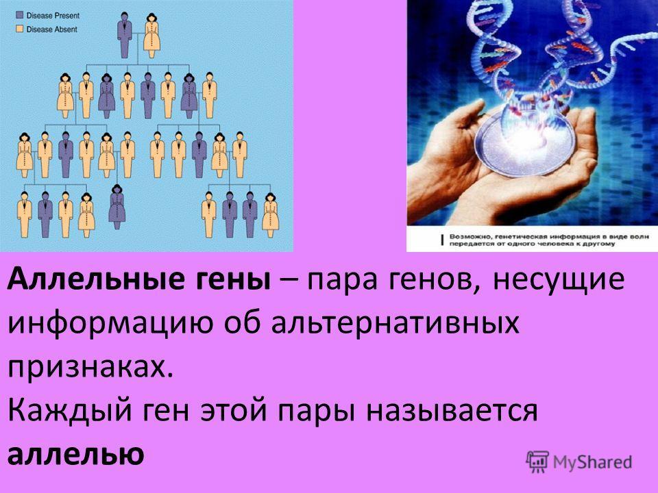 Аллельные гены – пара генов, несущие информацию об альтернативных признаках. Каждый ген этой пары называется аллелью