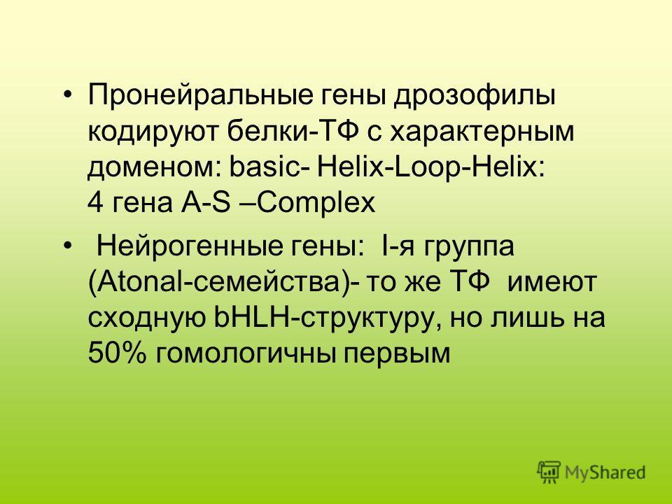 Пронейральные гены дрозофилы кодируют белки-ТФ с характерным доменом: basic- Helix-Loop-Helix: 4 гена A-S –Complex Нейрогенные гены: I-я группа (Atonal-семейства)- то же ТФ имеют сходную bHLH-структуру, но лишь на 50% гомологичны первым