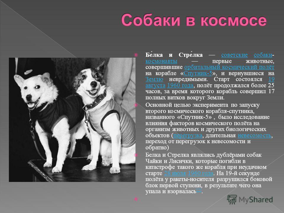 Белка и Стрелка советские собаки - космонавты первые животные, совершившие орбитальный космический полёт на корабле « Спутник -5», и вернувшиеся на Землю невредимыми. Старт состоялся 19 августа 1960 года, полёт продолжался более 25 часов, за время ко