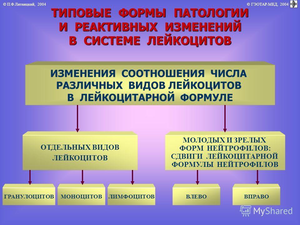 © П.Ф.Литвицкий, 2004 © ГЭОТАР-МЕД, 2004 ТИПОВЫЕ ФОРМЫ ПАТОЛОГИИ И РЕАКТИВНЫХ ИЗМЕНЕНИЙ В СИСТЕМЕ ЛЕЙКОЦИТОВ ИЗМЕНЕНИЯ СООТНОШЕНИЯ ЧИСЛА РАЗЛИЧНЫХ ВИДОВ ЛЕЙКОЦИТОВ В ЛЕЙКОЦИТАРНОЙ ФОРМУЛЕ ОТДЕЛЬНЫХ ВИДОВ ЛЕЙКОЦИТОВ МОЛОДЫХ И ЗРЕЛЫХ ФОРМ НЕЙТРОФИЛОВ: