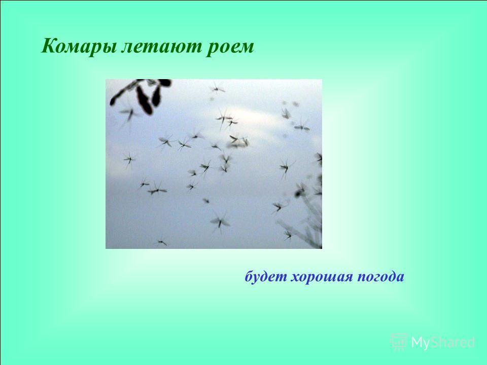 Комары летают роем будет хорошая погода