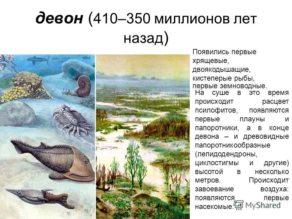 девон ( 410–350 миллионов лет назад ) Появились первые хрящевые, двоякодышащие, кистеперые рыбы, первые земноводные. На суше в это время происходит расцвет псилофитов, появляются первые плауны и папоротники, а в конце девона – и древовидные папоротни