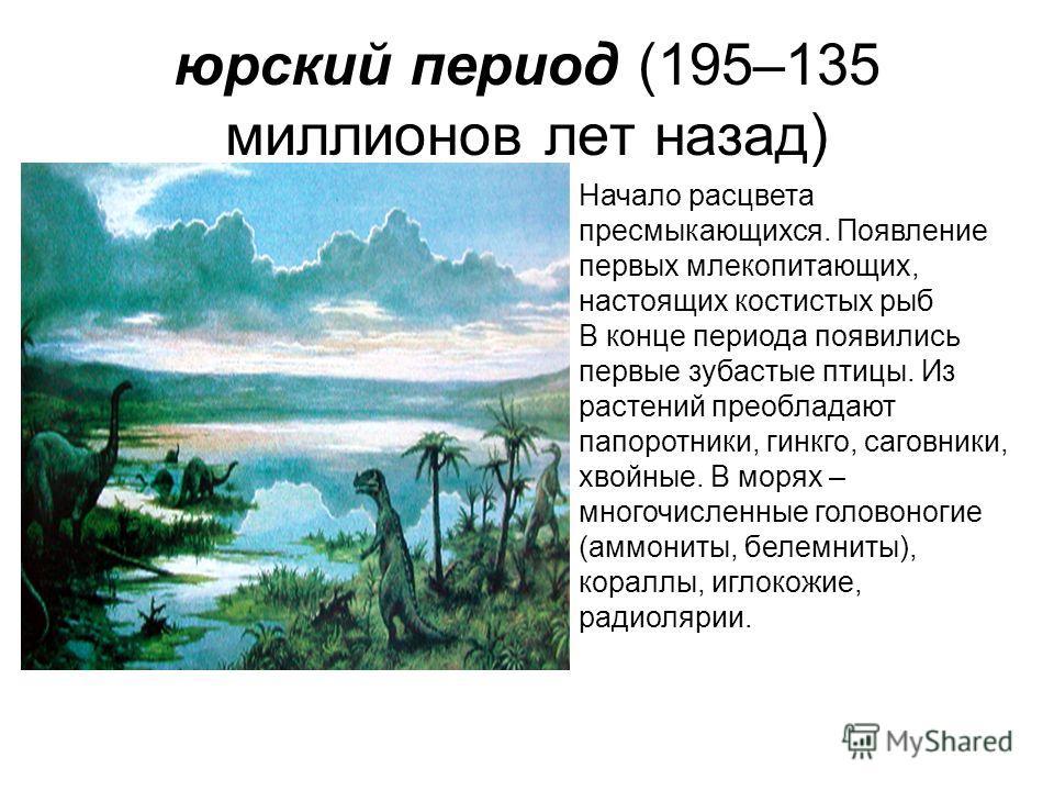 юрский период (195–135 миллионов лет назад) Начало расцвета пресмыкающихся. Появление первых млекопитающих, настоящих костистых рыб В конце периода появились первые зубастые птицы. Из растений преобладают папоротники, гинкго, саговники, хвойные. В мо