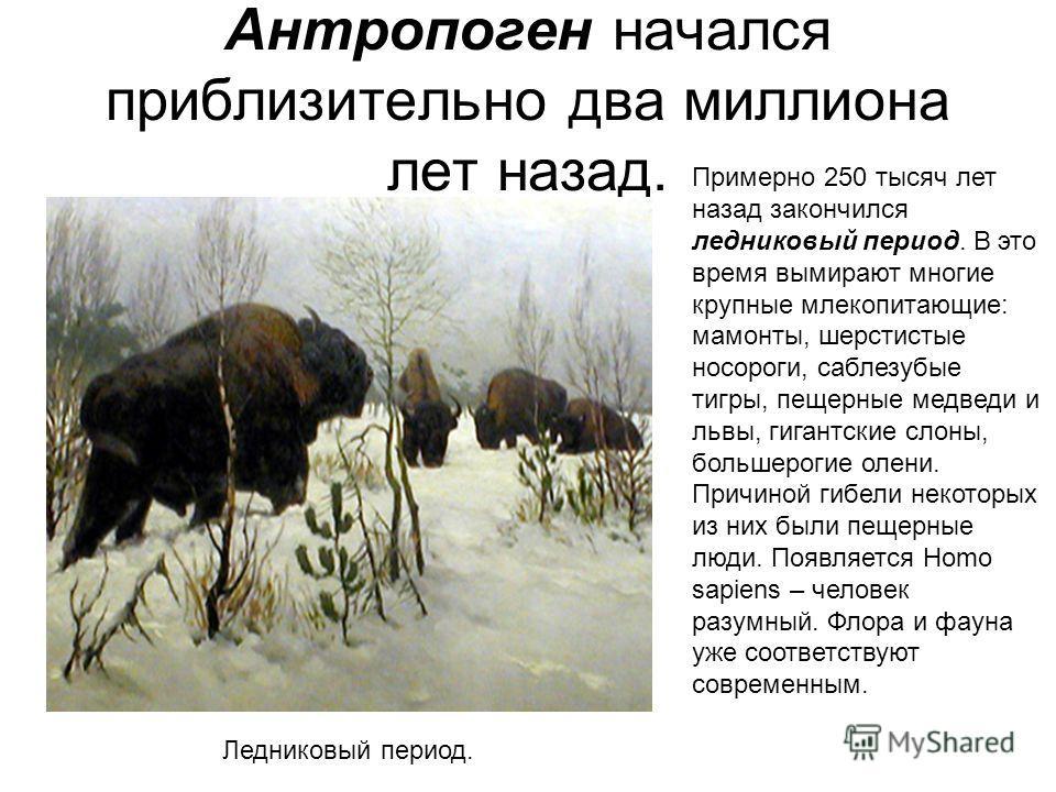 Антропоген начался приблизительно два миллиона лет назад. Примерно 250 тысяч лет назад закончился ледниковый период. В это время вымирают многие крупные млекопитающие: мамонты, шерстистые носороги, саблезубые тигры, пещерные медведи и львы, гигантски