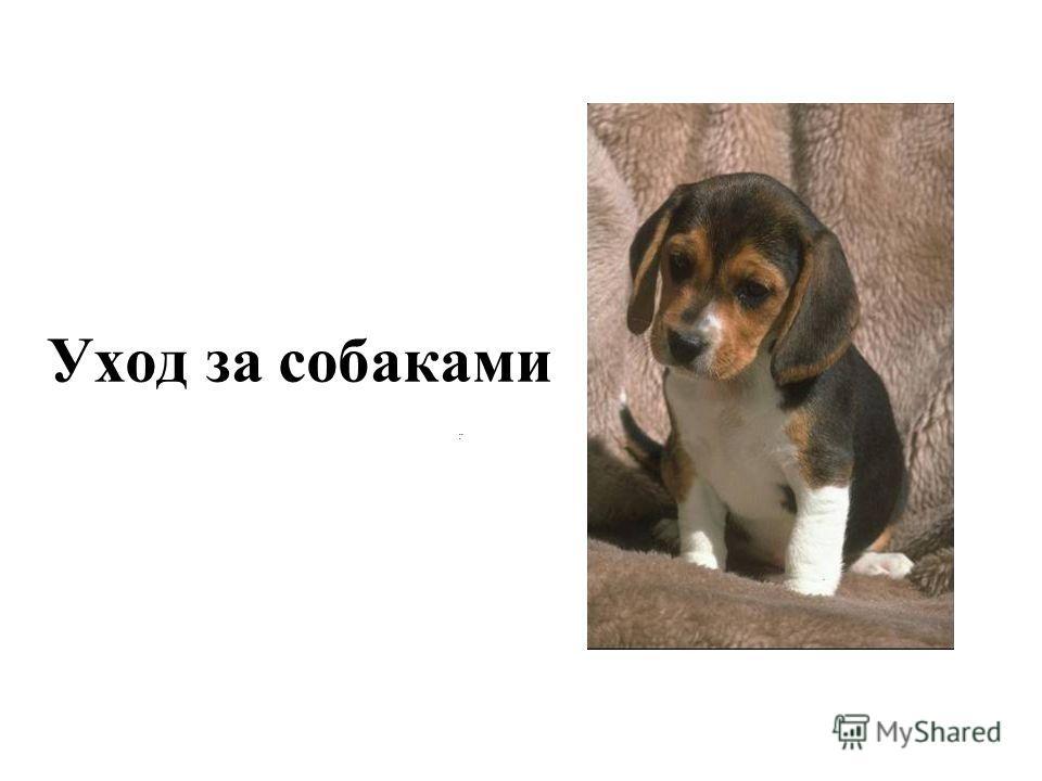 .: Уход за собаками