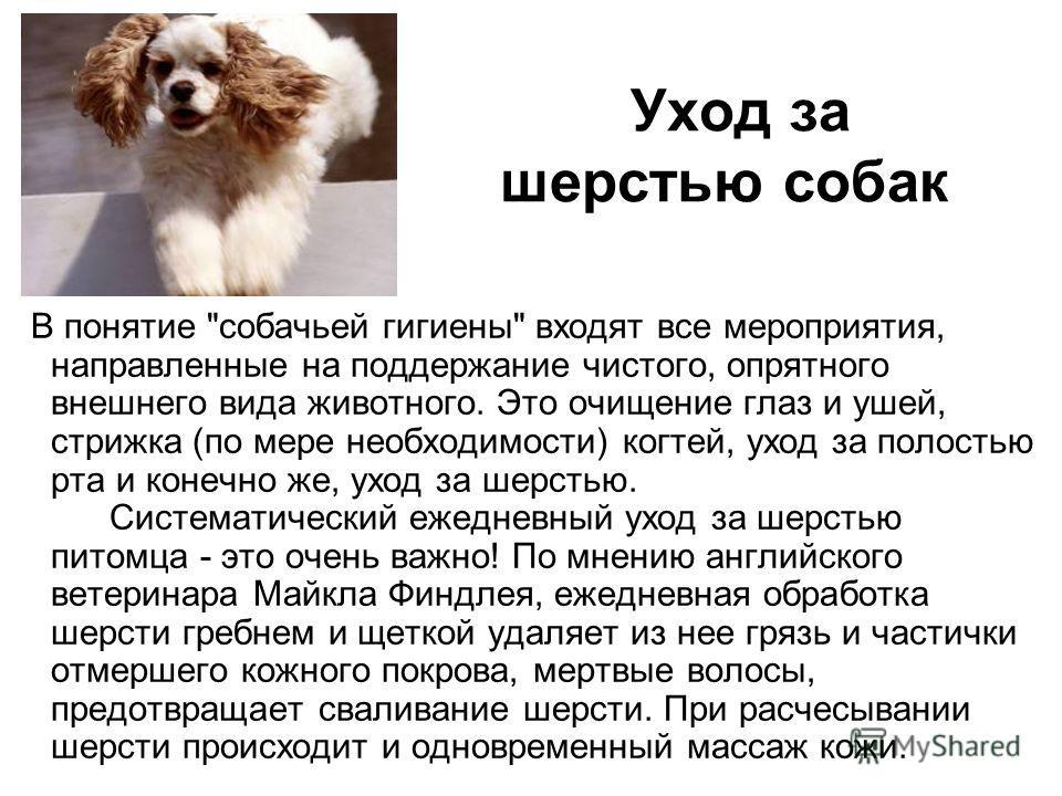 Уход за шерстью собак В понятие