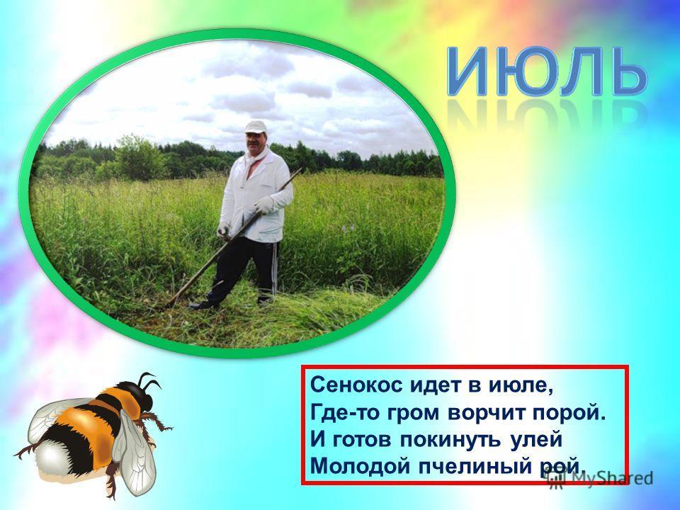 Сенокос идет в июле, Где-то гром ворчит порой. И готов покинуть улей Молодой пчелиный рой.