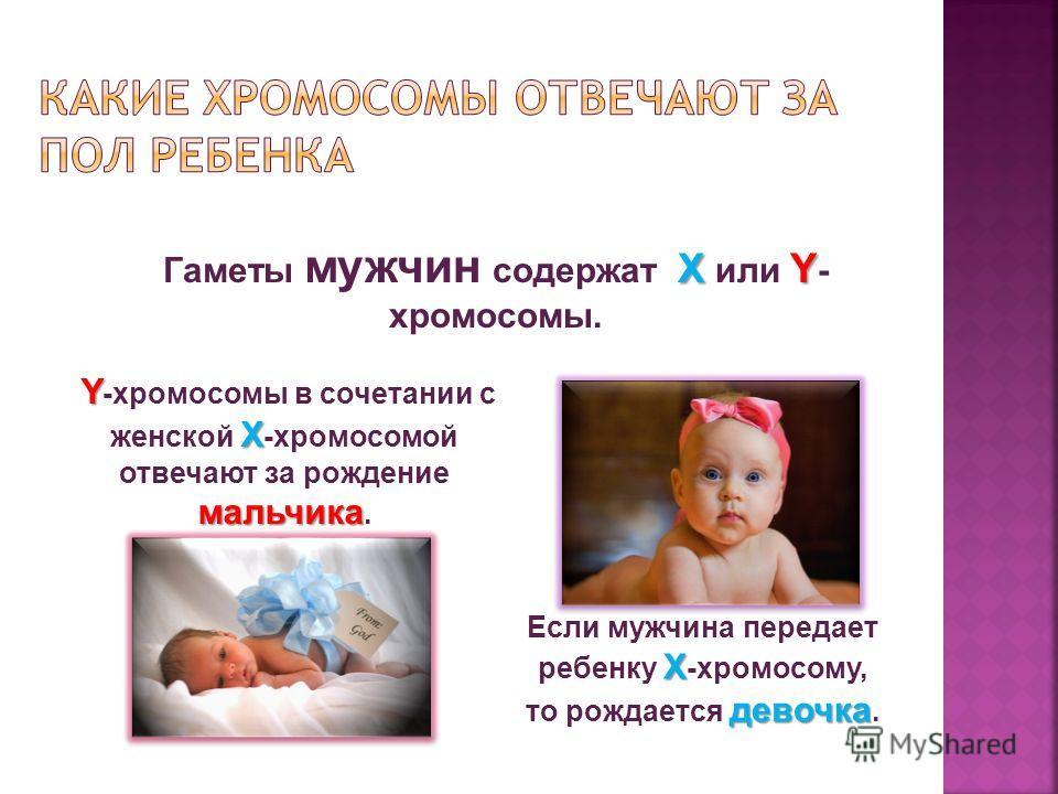 ХY Гаметы мужчин содержат Х или Y - хромосомы. Y Х мальчика Y -хромосомы в сочетании с женской Х -хромосомой отвечают за рождение мальчика. Х девочка Если мужчина передает ребенку Х -хромосому, то рождается девочка.