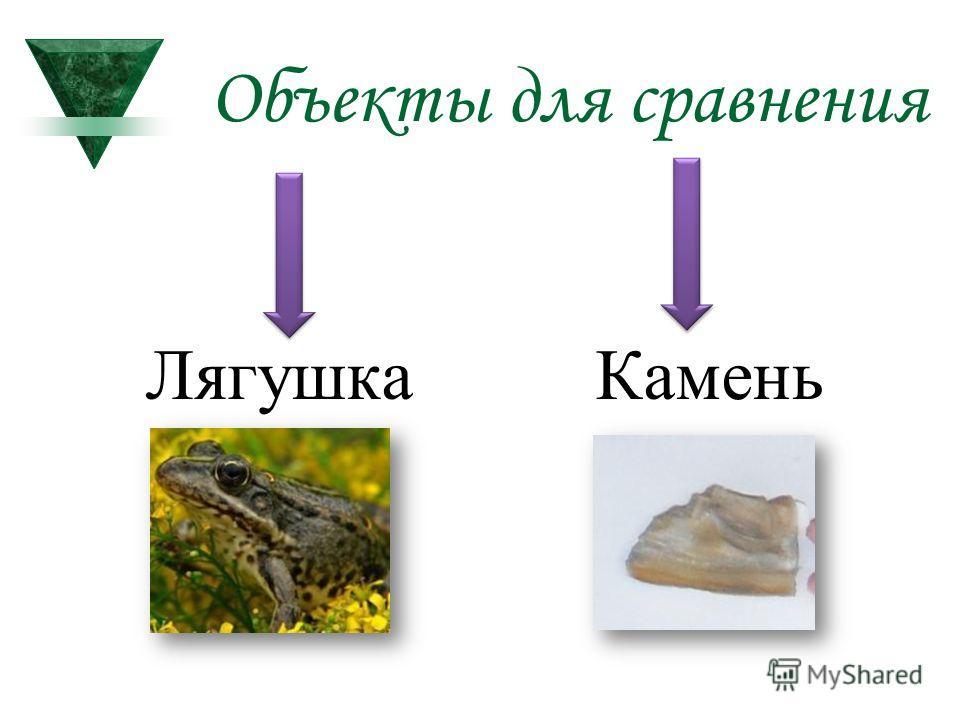 Объекты для сравнения Лягушка Камень