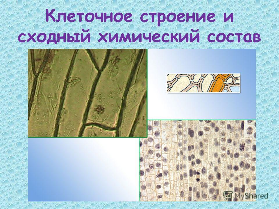 Клеточное строение и сходный химический состав