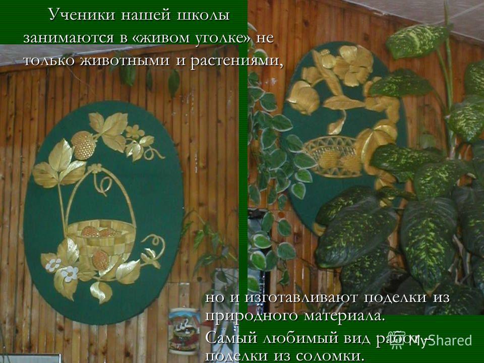 В кабинете очень много цветов. Они украшают жильё, помогают создать в доме уют, тепло. Занимаясь цветоводством, учащиеся много узнают о полюбившихся растениях: их родину, условия их произрастания, отношение к свету, теплу. О их пользе для человека.