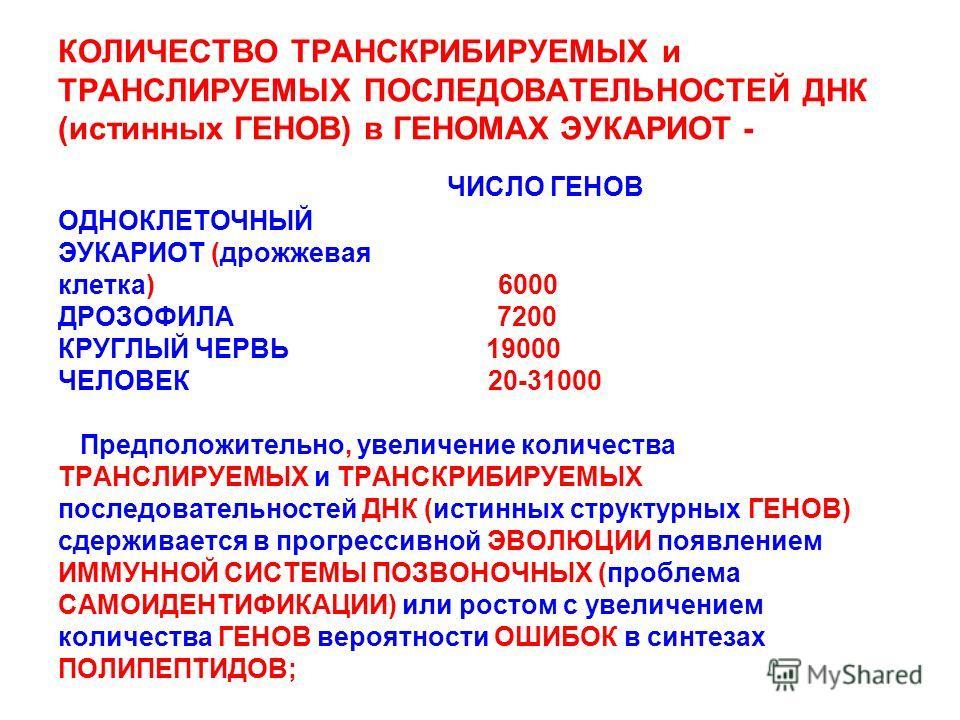 КОЛИЧЕСТВО ТРАНСКРИБИРУЕМЫХ и ТРАНСЛИРУЕМЫХ ПОСЛЕДОВАТЕЛЬНОСТЕЙ ДНК (истинных ГЕНОВ) в ГЕНОМАХ ЭУКАРИОТ - ЧИСЛО ГЕНОВ ОДНОКЛЕТОЧНЫЙ ЭУКАРИОТ (дрожжевая клетка) 6000 ДРОЗОФИЛА 7200 КРУГЛЫЙ ЧЕРВЬ 19000 ЧЕЛОВЕК 20-31000 Предположительно, увеличение коли