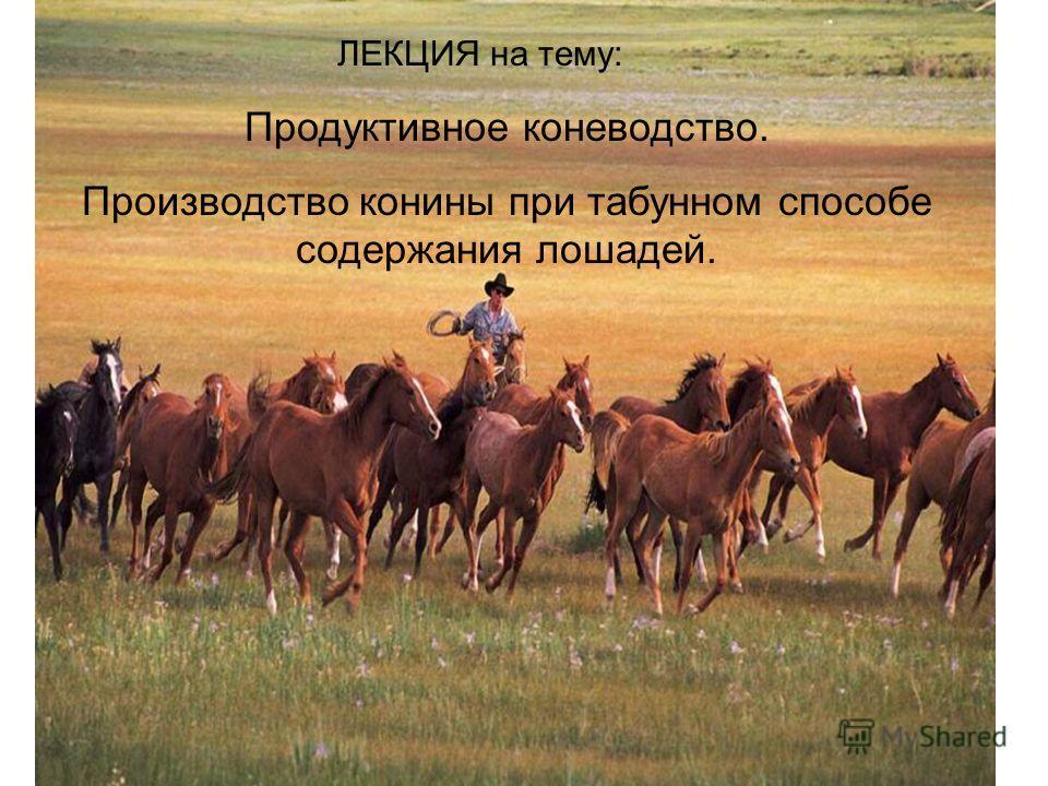ЛЕКЦИЯ на тему: Продуктивное коневодство. Производство конины при табунном способе содержания лошадей.
