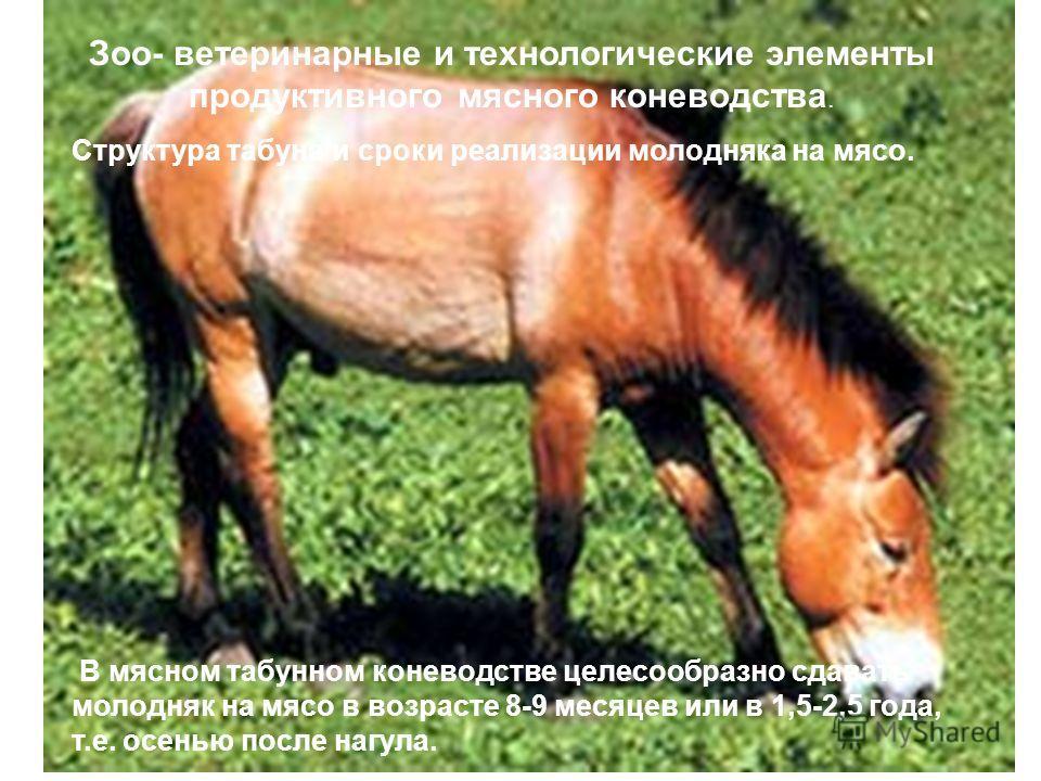 Зоо- ветеринарные и технологические элементы продуктивного мясного коневодства. Структура табуна и сроки реализации молодняка на мясо. В мясном табунном коневодстве целесообразно сдавать молодняк на мясо в возрасте 8-9 месяцев или в 1,5-2,5 года, т.е