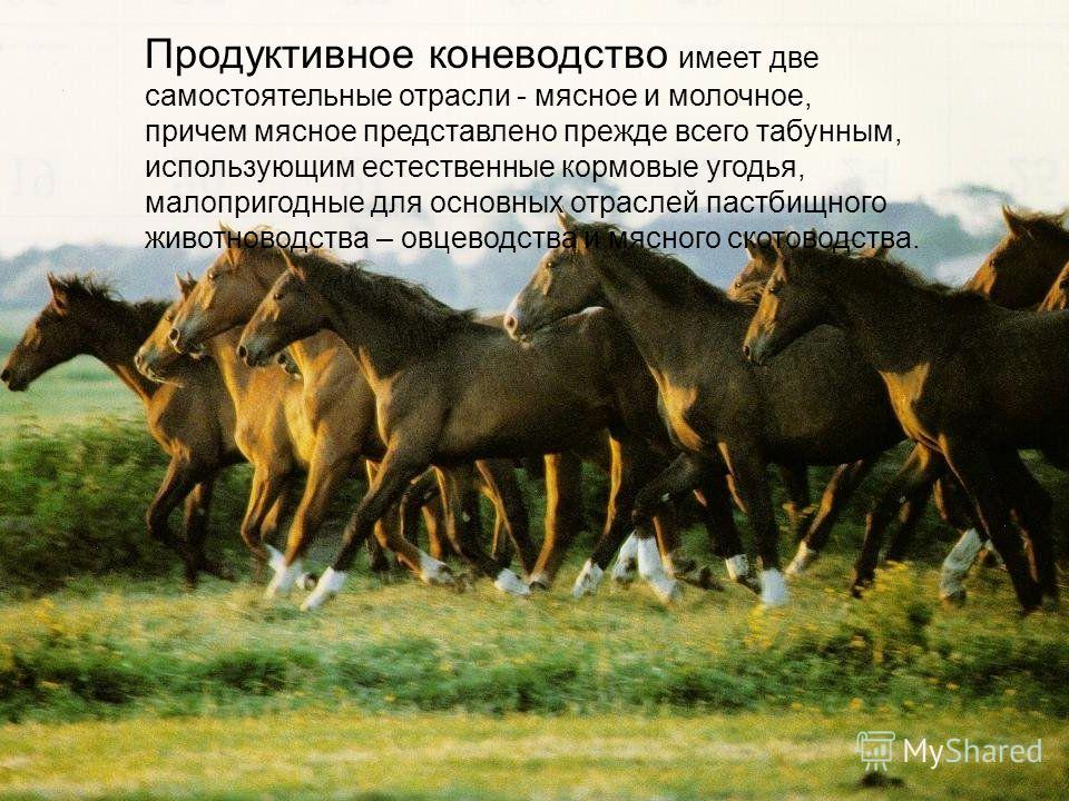 Продуктивное коневодство имеет две самостоятельные отрасли - мясное и молочное, причем мясное представлено прежде всего табунным, использующим естественные кормовые угодья, малопригодные для основных отраслей пастбищного животноводства – овцеводства