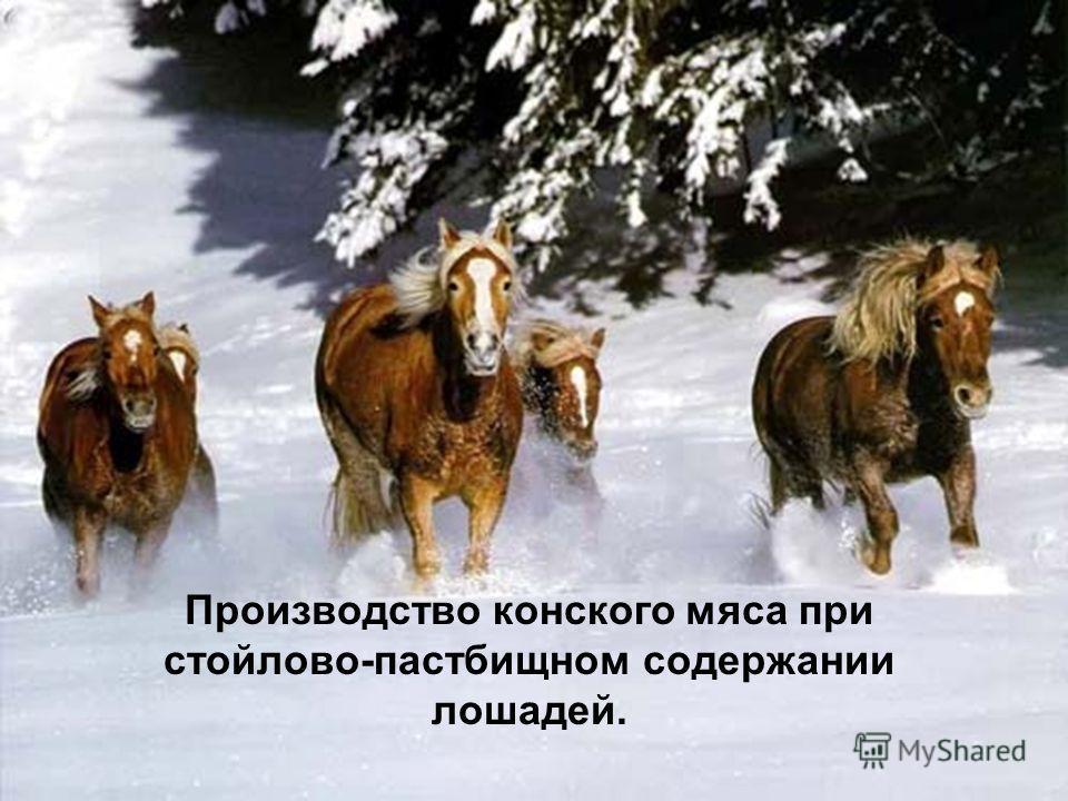 Производство конского мяса при стойлово-пастбищном содержании лошадей.