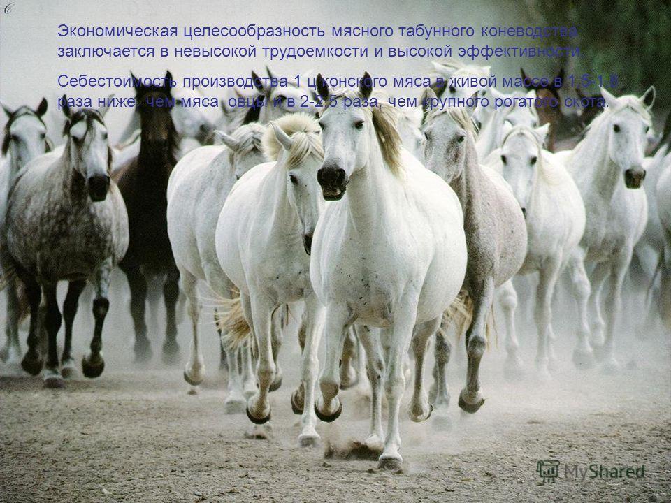 Экономическая целесообразность мясного табунного коневодства заключается в невысокой трудоемкости и высокой эффективности. Себестоимость производства 1 ц конского мяса в живой массе в 1,5-1,8 раза ниже, чем мяса овцы и в 2-2,5 раза, чем крупного рога