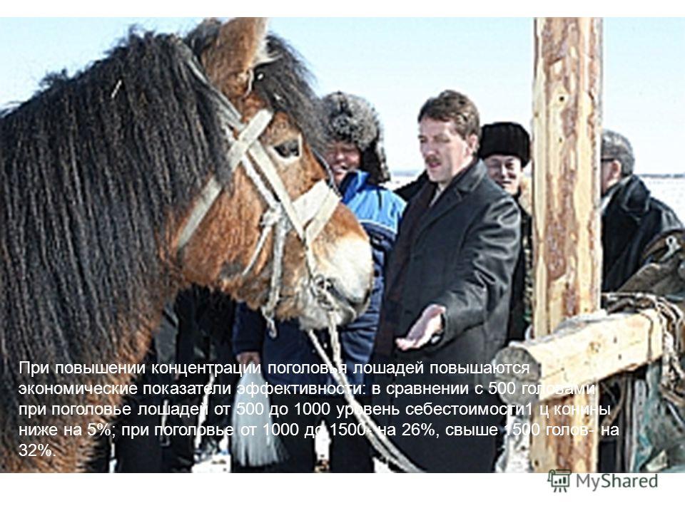При повышении концентрации поголовья лошадей повышаются экономические показатели эффективности: в сравнении с 500 головами при поголовье лошадей от 500 до 1000 уровень себестоимости1 ц конины ниже на 5%; при поголовье от 1000 до 1500- на 26%, свыше 1