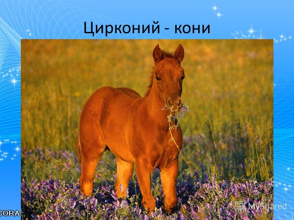 Цирконий - кони