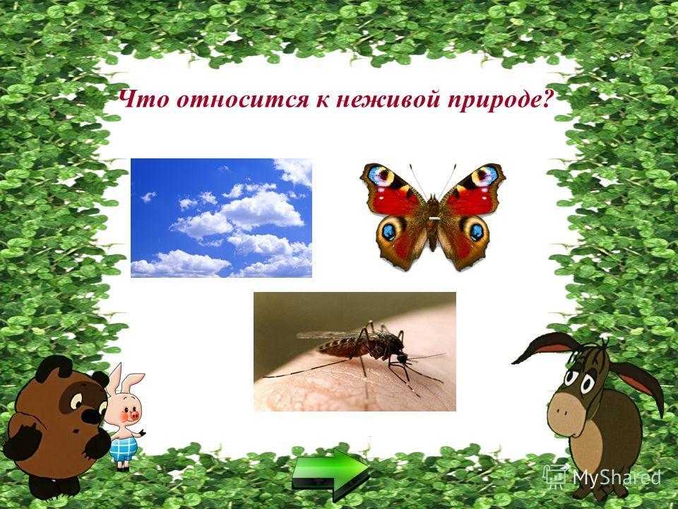 Что относится к живой природе?