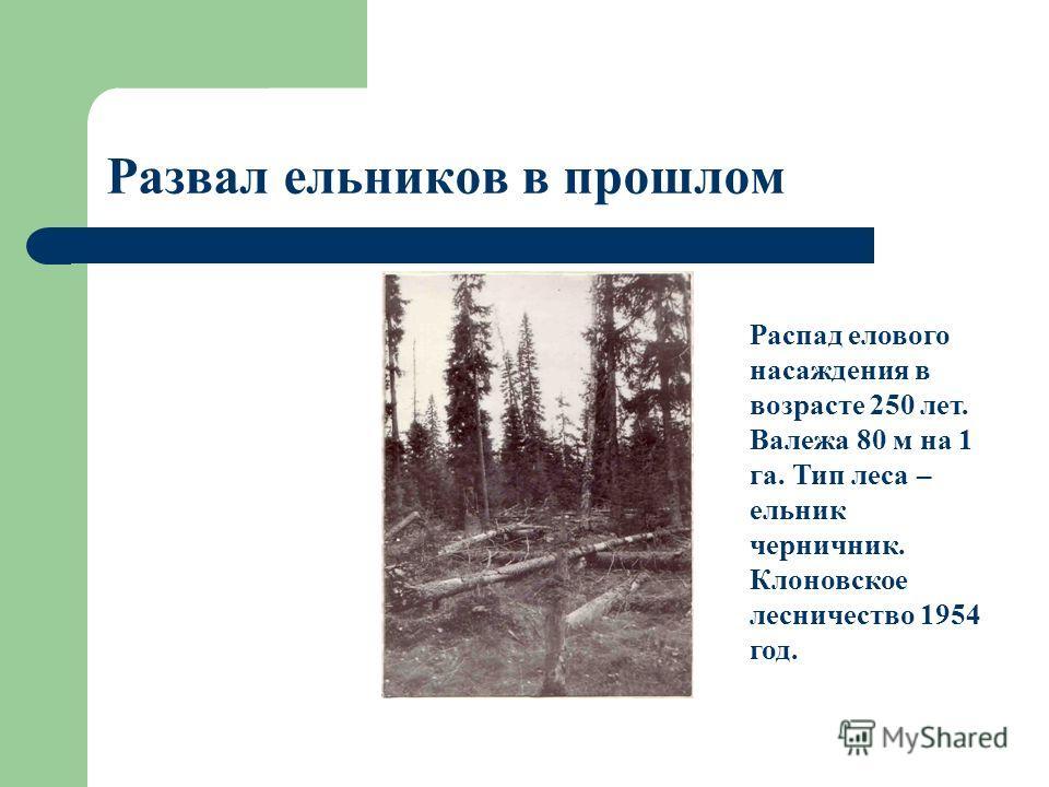 Развал ельников в прошлом Распад елового насаждения в возрасте 250 лет. Валежа 80 м на 1 га. Тип леса – ельник черничник. Клоновское лесничество 1954 год.