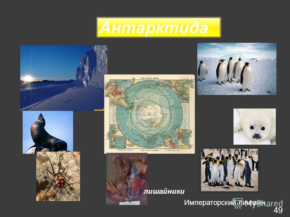 Антарктида лишайники Императорский пингвин 49