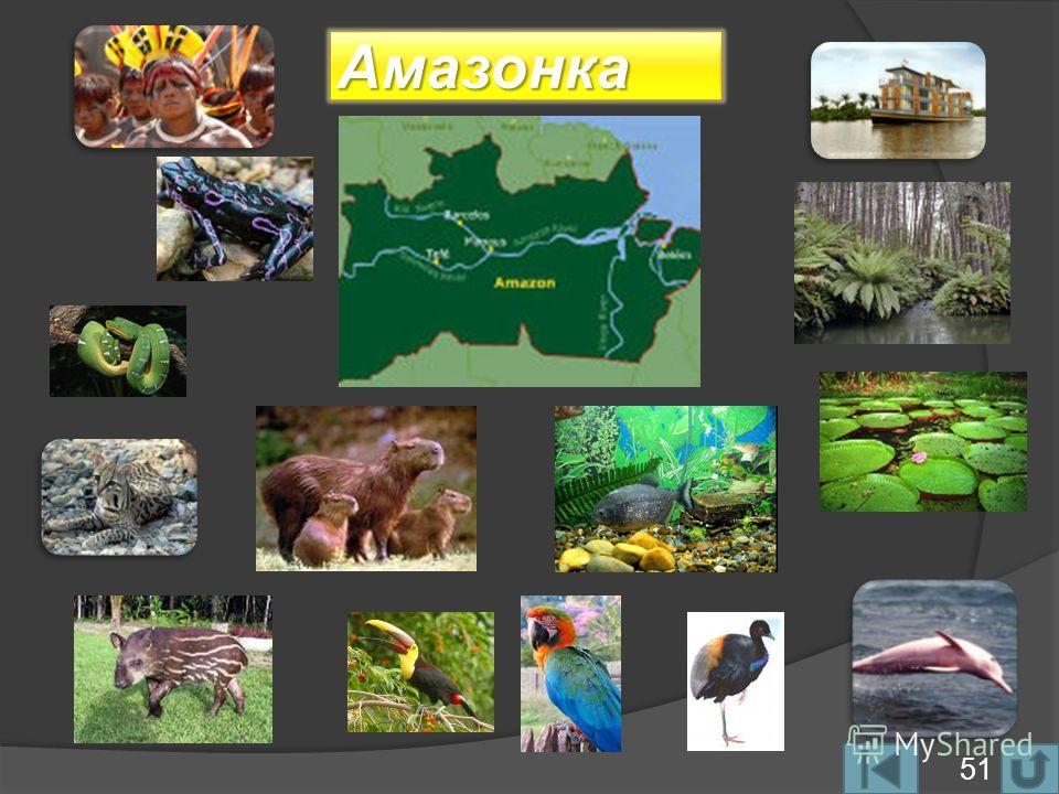 Амазонка 51
