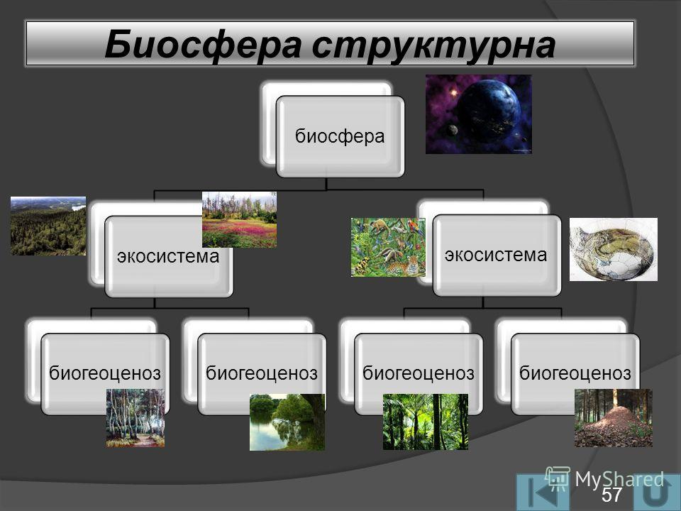 Биосфера структурна биосфераэкосистемабиогеоценоз экосистемабиогеоценоз 57