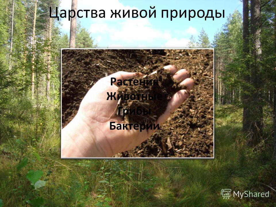 Царства живой природы Растения Животные Грибы Бактерии