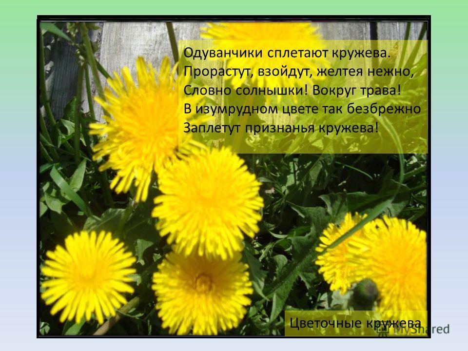 Одуванчики сплетают кружева. Прорастут, взойдут, желтея нежно, Словно солнышки! Вокруг трава! В изумрудном цвете так безбрежно Заплетут признанья кружева! Цветочные кружева