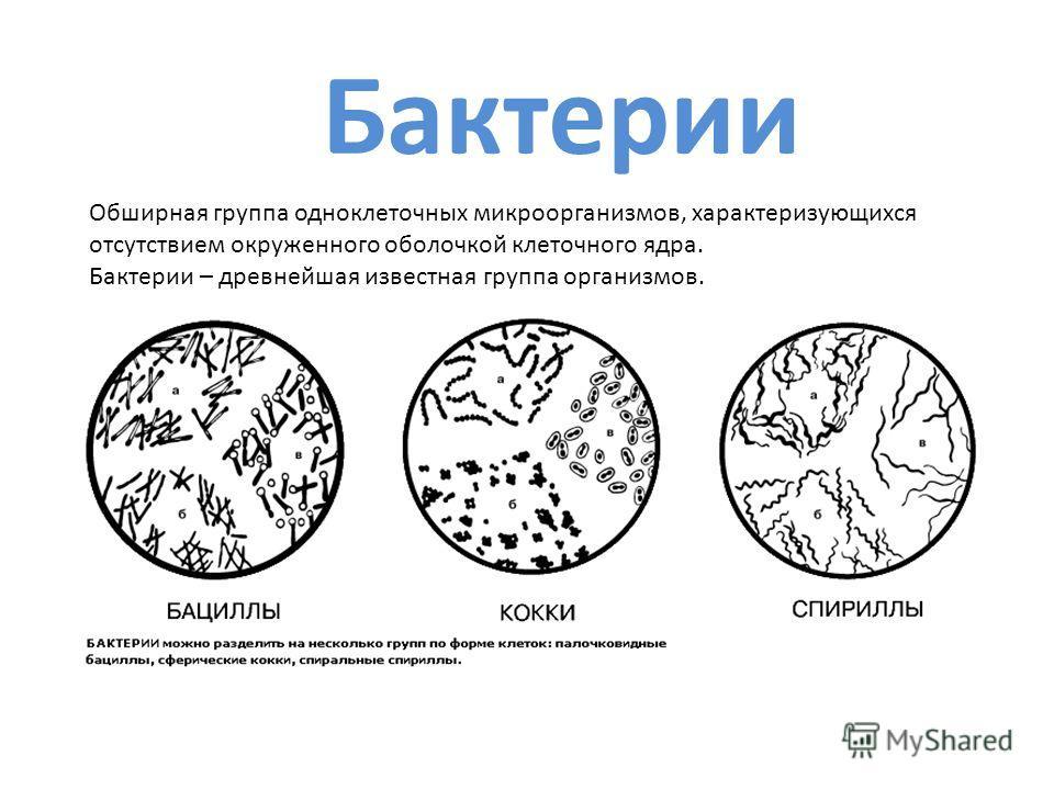 Бактерии Обширная группа одноклеточных микроорганизмов, характеризующихся отсутствием окруженного оболочкой клеточного ядра. Бактерии – древнейшая известная группа организмов.