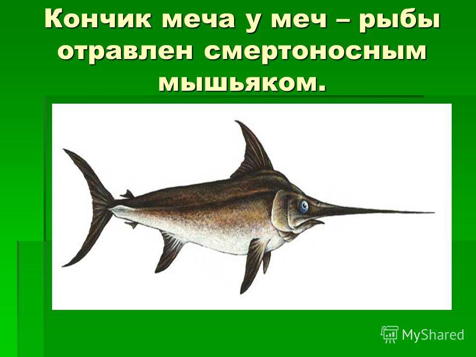 Кончик меча у меч – рыбы отравлен смертоносным мышьяком.