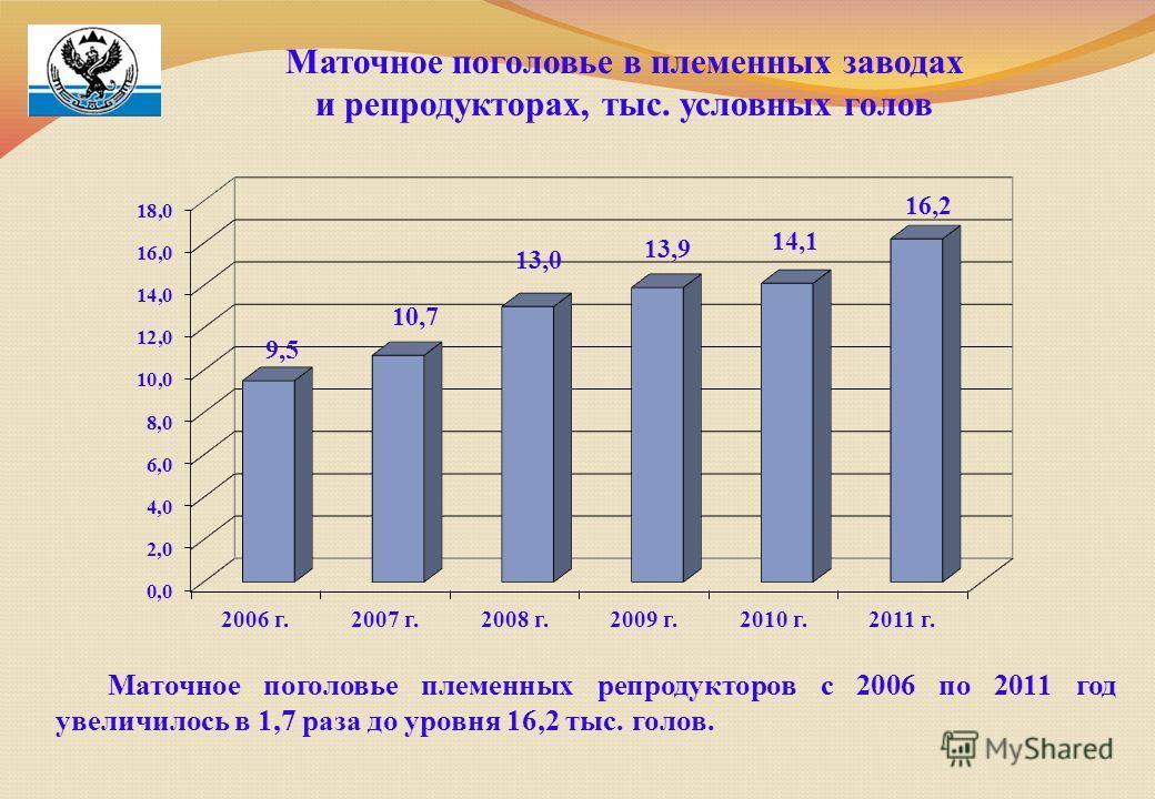 Маточное поголовье в племенных заводах и репродукторах, тыс. условных голов Маточное поголовье племенных репродукторов с 2006 по 2011 год увеличилось в 1,7 раза до уровня 16,2 тыс. голов.
