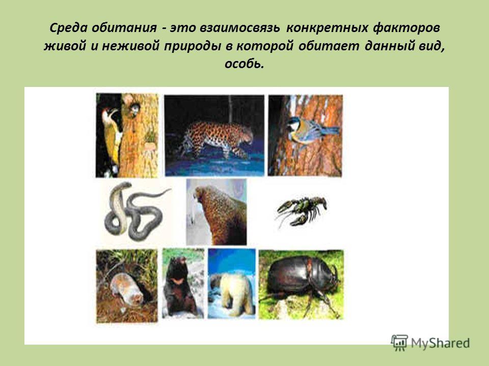 Среда обитания - это взаимосвязь конкретных факторов живой и неживой природы в которой обитает данный вид, особь.