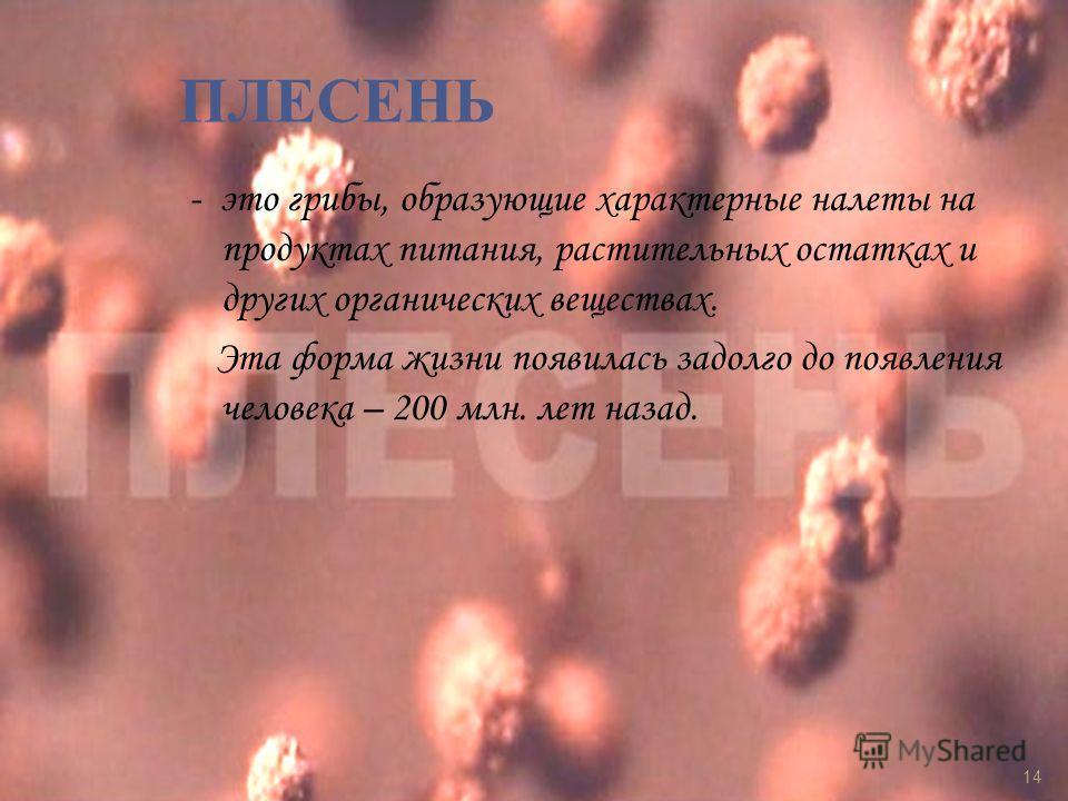 ПЛЕСЕНЬ - это грибы, образующие характерные налеты на продуктах питания, растительных остатках и других органических веществах. Эта форма жизни появилась задолго до появления человека – 200 млн. лет назад. 14