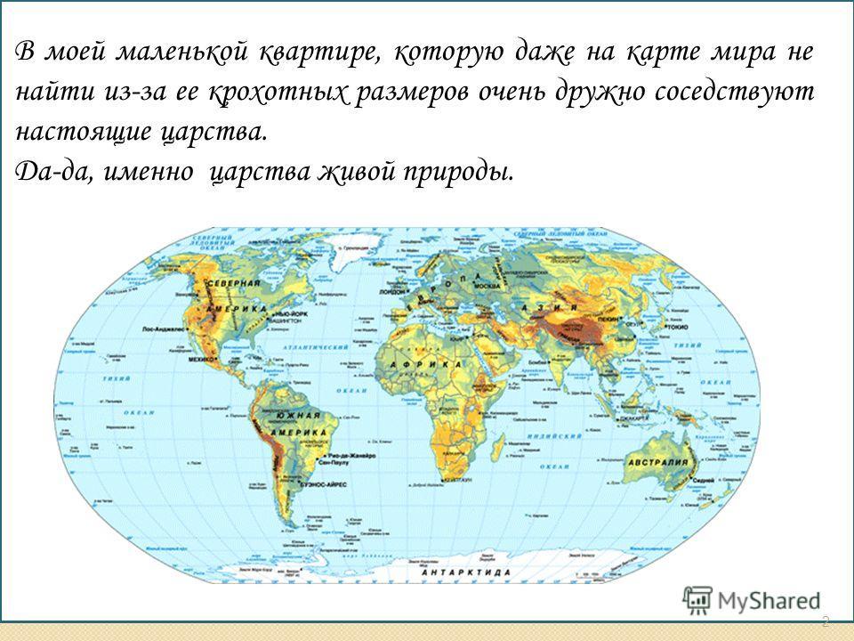 В моей маленькой квартире, которую даже на карте мира не найти из-за ее крохотных размеров очень дружно соседствуют настоящие царства. Да-да, именно царства живой природы. 2