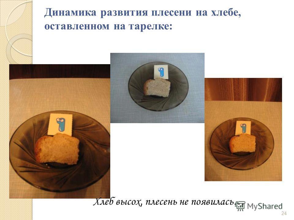 Динамика развития плесени на хлебе, оставленном на тарелке: Хлеб высох, плесень не появилась… 24