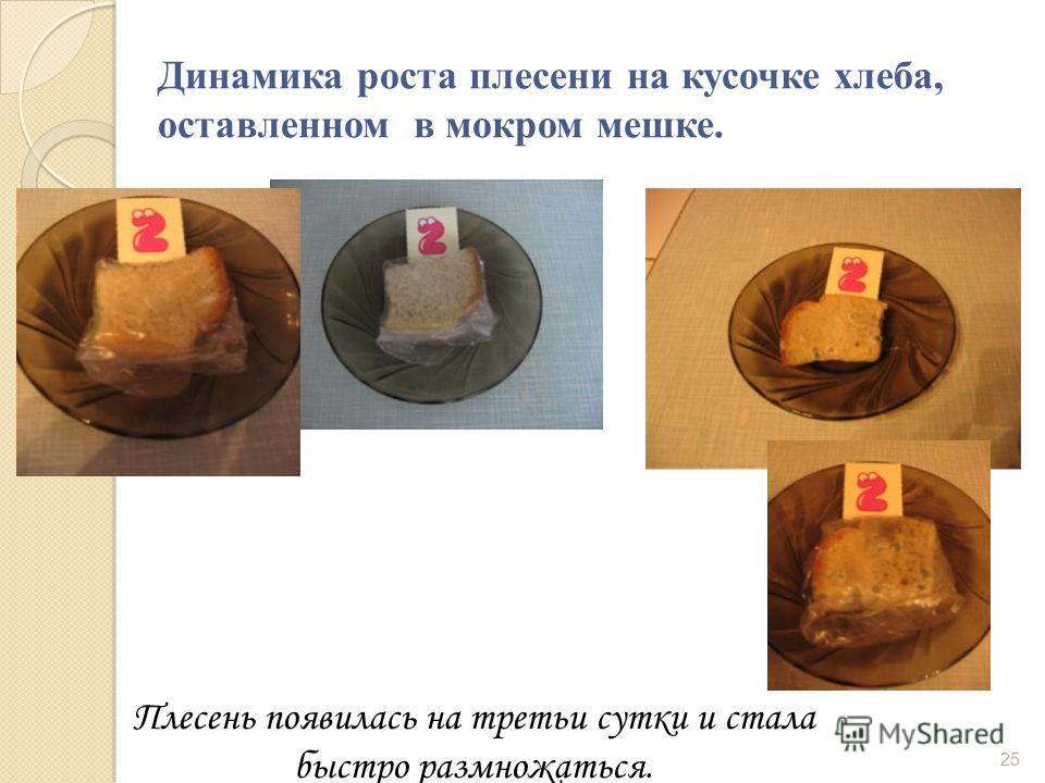 Динамика роста плесени на кусочке хлеба, оставленном в мокром мешке. Плесень появилась на третьи сутки и стала быстро размножаться. 25